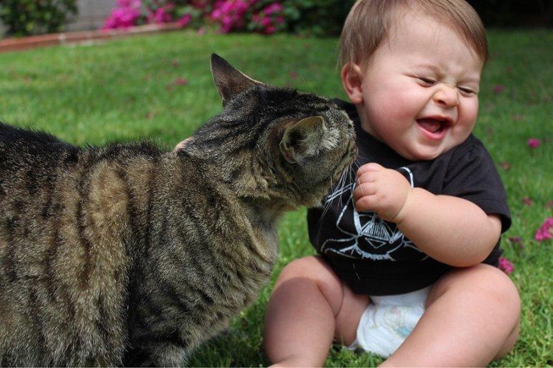 какую кошку выбрать для ребенка