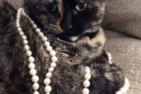 Кошка в жемчужном ожерелье